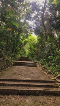 mount faber trail